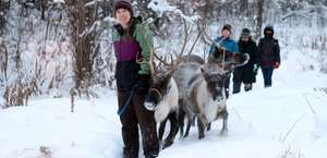 Running Reindeer Ranch
