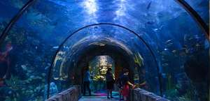 Audubon Aquarium of the Americas