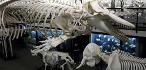 Museum of Osteology