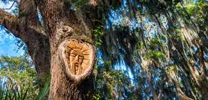 The Tree Spirits of St. Simons Island