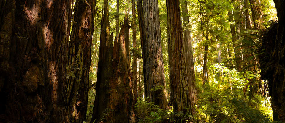 Going the distance: 300 miles of Redwoods and beaches