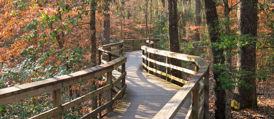 The Ultimate Guide to Congaree National Park