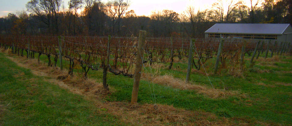 Philly Wine Tours