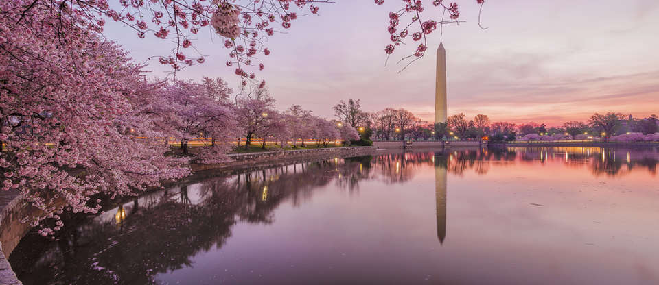 Explore hidden gems & cherry blossoms at the National Mall
